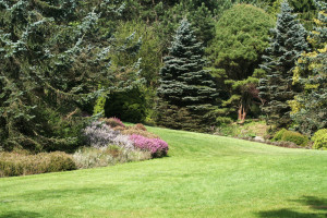 backyard landscaping orangeburg
