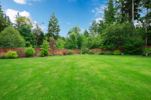 lawn fertilizers orangeburg
