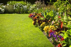 gardening plants yard orangeburg